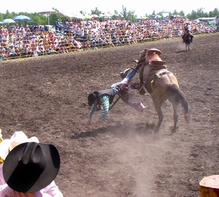 A bronc rider bites the dust at the Effie North Star Stampede Rodeo