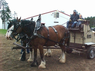 A Clydesdale team