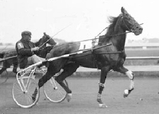 Dan S. -- an early 20th century pacer in a harness race