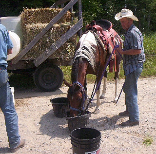 Horse with five gallon pails
