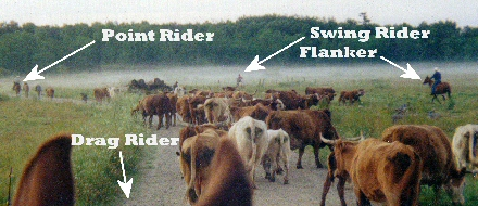 Effie cattle drive