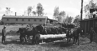 Horses being watered at lumber camp near Effie, Minnesota
