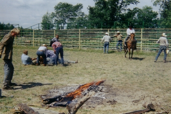 Cattle branding at the North Star Ranch, Effie, Minnesota