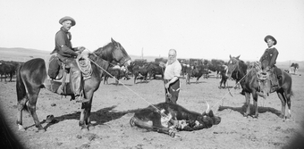 Ephriam Swain Finch branding cattle on the Milldale Ranch near Arnold, Custer County, Nebraska. ca. 1900