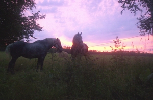 Horses with red sunrise