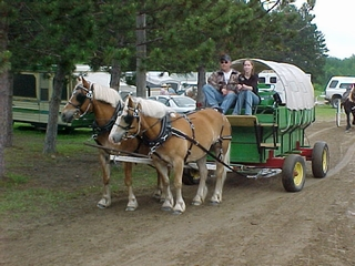 A team of draft horses