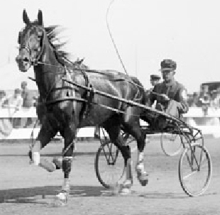 Major Law -- an early 20th century trotting horse in a harness race