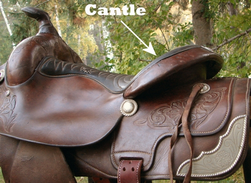 Cantle on a saddle