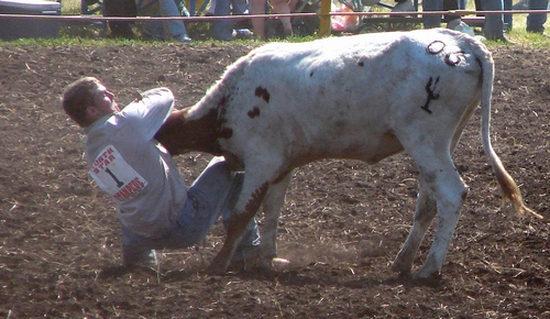 Bulldogging at a rodeo