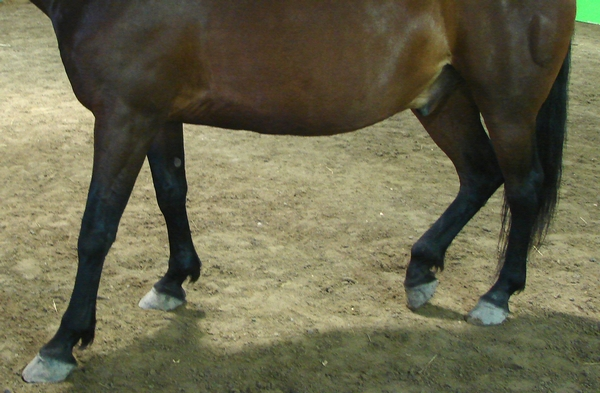 A horse standing three legged