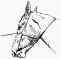 First Form War Bridle