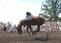 A bucking horse breaking in two