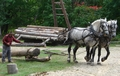 Draft horse using chain traces