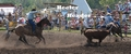 Calf-roping header and heeler in action