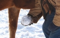 Snowball on a horse's hoof
