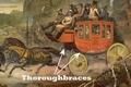 Thoroughbraces