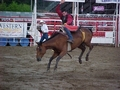 Bronco bucking at a rodeo