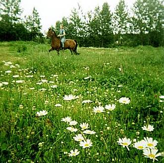 Riding through the daisies