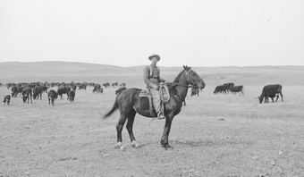 Cowboy and a herd of cattle in Cherry County, Nebraska, in 1889