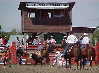 Bull riding action at the North Star Stampede Rodeo