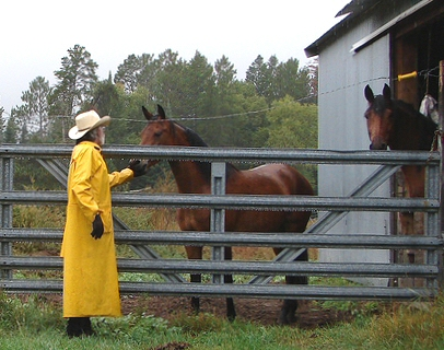 Cowboy Bob checking horses in the rain