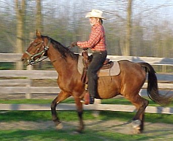 Cowboy Bob and and his American Saddlebred horse, Willy
